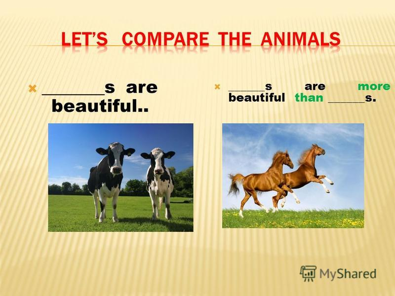 _______s are beautiful.. ______s are more beautiful than ______s.