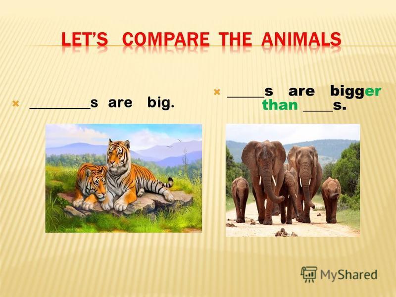 ________s are big. _____s are bigger than ____s.