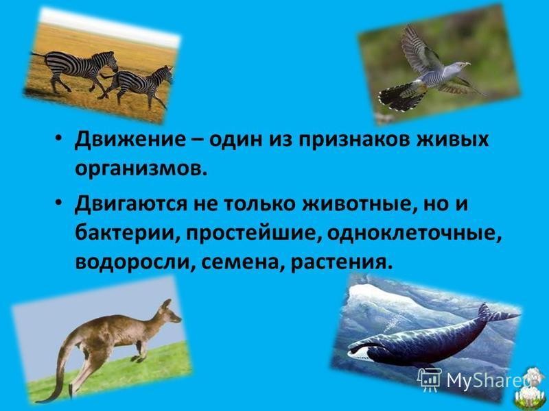 Движение – один из признаков живых организмов. Двигаются не только животные, но и бактерии, простейшие, одноклеточные, водоросли, семена, растения.