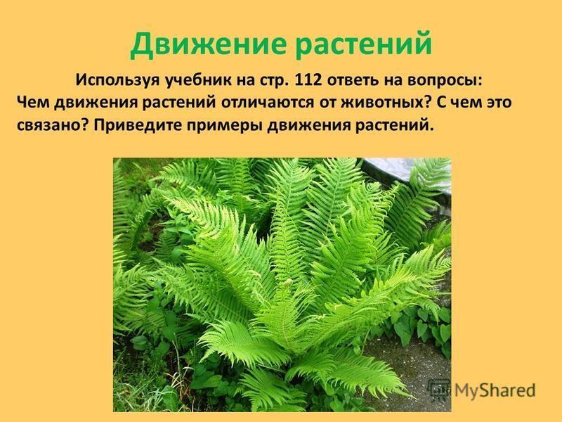 Движение растений Используя учебник на стр. 112 ответь на вопросы: Чем движения растений отличаются от животных? С чем это связано? Приведите примеры движения растений.
