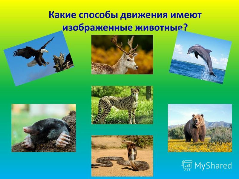 Какие способы движения имеют изображенные животные?