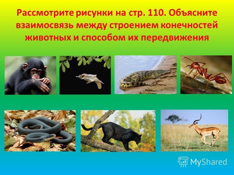 Рассмотрите рисунки на стр. 110. Объясните взаимосвязь между строением конечностей животных и способом их передвижения