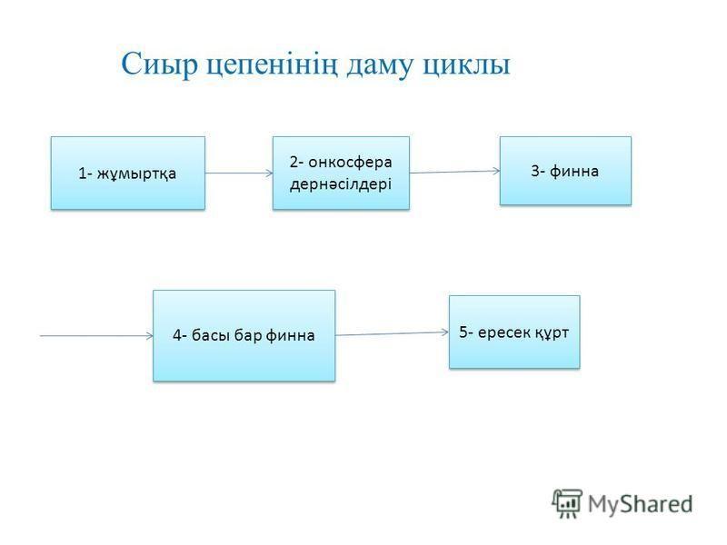 1- жұмыртқа 2- онкосфера дернәсілдері 4- басы бар финна 3- финна 5- ппересек құрт Сиыр цепенінің даму циклы