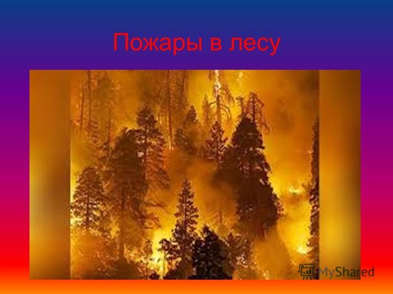 Пожары в лесу