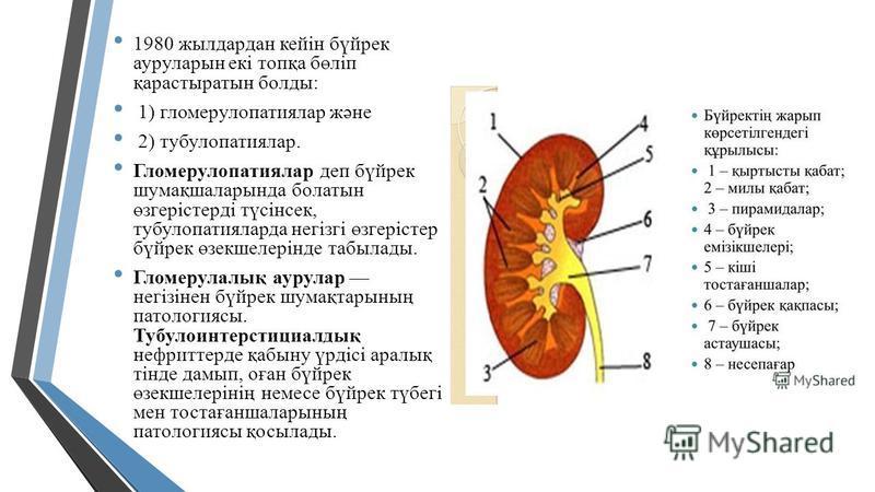 1980 жилдардан кейін бүйрек ауруларын екі топқа бөліп қарастыратын балды: 1) гломерулопатиялар және 2) тубулопатиялар. Гломерулопатиялар деп бүйрек шумақшаларында болатын өзгерістерді түсінсек, тубулопатияларда негізгі өзгерістер бүйрек өзекшелерінде