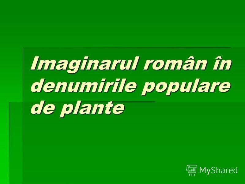 Imaginarul român în denumirile populare de plante