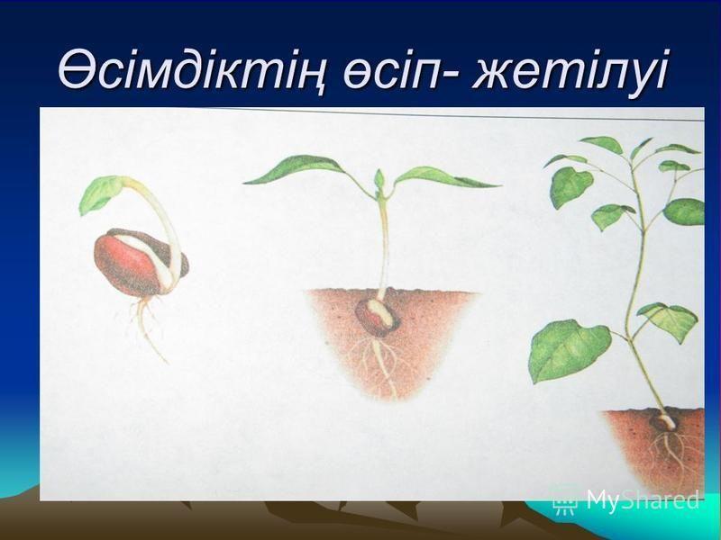 Өсімдіктің өсіп- жетілуі