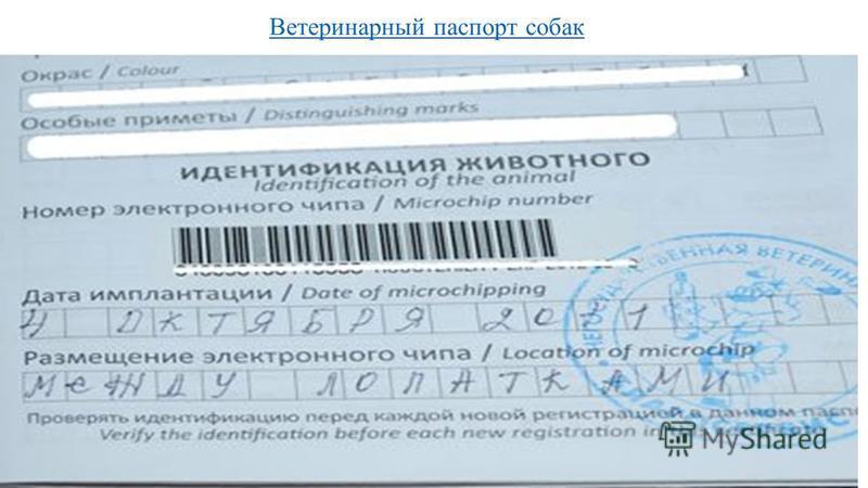 Ветеринарный паспорт собак