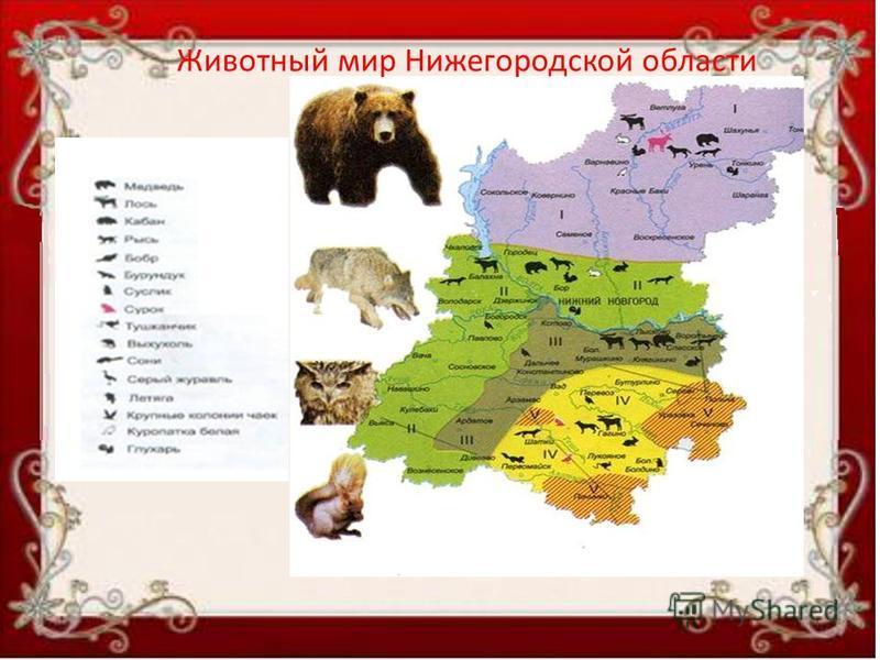 Животный мир Нижегородской области