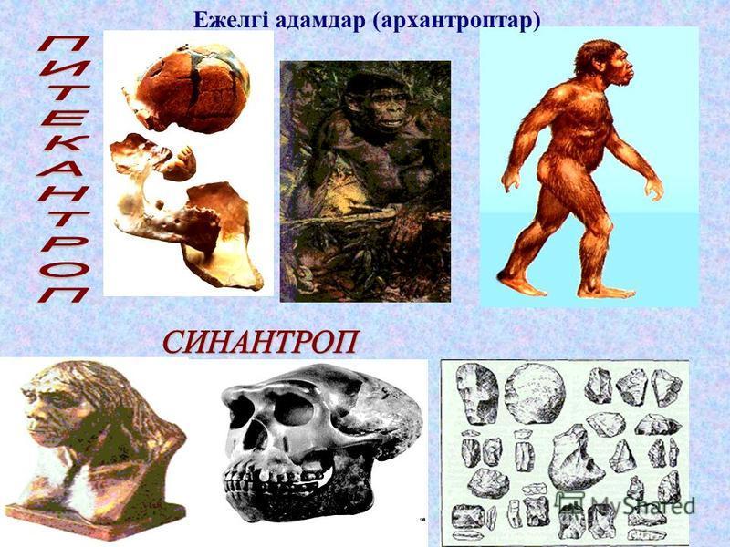 ІІІ. Жаңа сабақ &43. Адам эволюциясының кезеңдері: ежелгі,ертедегі және осы заманғы алғашқы адамдар.