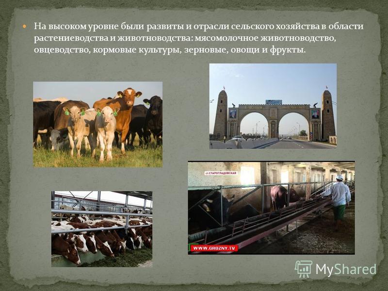 На высоком уровне были развиты и отрасли сельского хозяйства в области растениеводства и животноводства: мясомолочное животноводство, овцеводство, кормовые культуры, зерновые, овощи и фрукты.