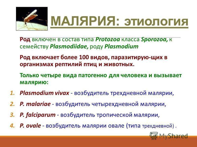 МАЛЯРИЯ: этиология Род включен в состав типа Protozoa класса Sporozoa, к семейству Plasmodiidae, роду Plasmodium Род включает более 100 видов, паразитирую-щих в организмах рептилий птиц и животных. Только четыре вида патогенно для человека и вызывает