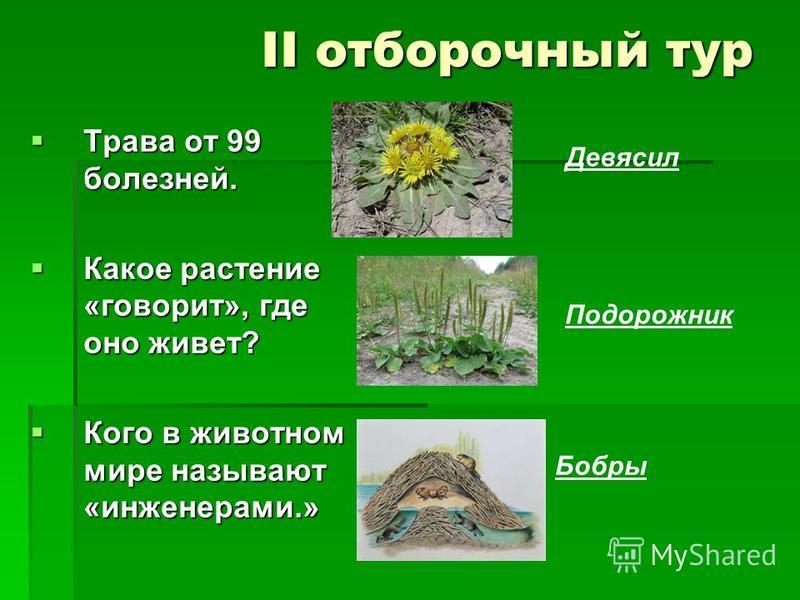 II отборочный тур Трава от 99 болезней. Трава от 99 болезней. Какое растение «говорит», где оно живет? Какое растение «говорит», где оно живет? Кого в животном мире называют «инженерами.» Кого в животном мире называют «инженерами.» Девясил Подорожник