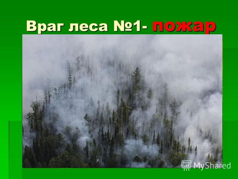 Враг леса 1- пожар