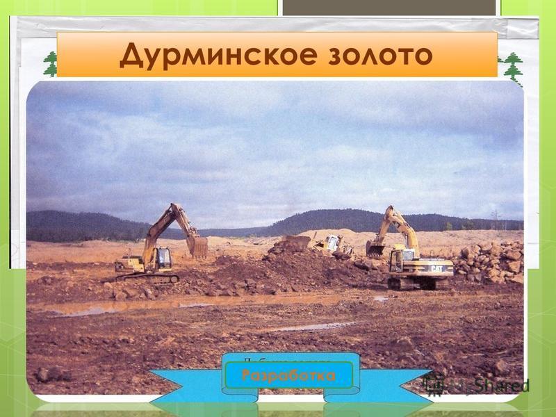 Дурминское золото Разработка