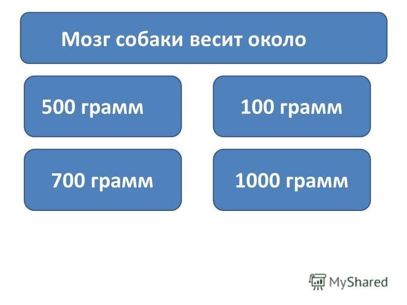 Мозг собаки весит около 500 грамм 100 грамм 700 грамм 1000 грамм