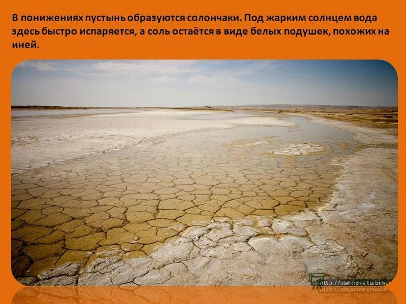 В понижениях пустынь образуются солончаки. Под жарким солнцем вода здесь быстро испаряется, а соль остаётся в виде белых подушек, похожих на иней.