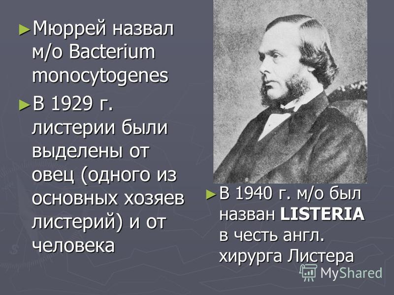 Мюррей назвал м/о Bacterium monocytogenes Мюррей назвал м/о Bacterium monocytogenes В 1929 г. листерии были выделены от овец (одного из основных хозяев листерий) и от человека В 1929 г. листерии были выделены от овец (одного из основных хозяев листер