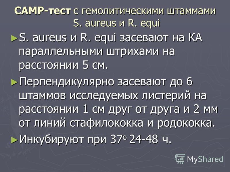 САМР-тест с гемолитическими штаммами S. aureus и R. equi S. aureus и R. equi засевают на КА параллельными штрихами на расстоянии 5 см. S. aureus и R. equi засевают на КА параллельными штрихами на расстоянии 5 см. Перпендикулярно засевают до 6 штаммов