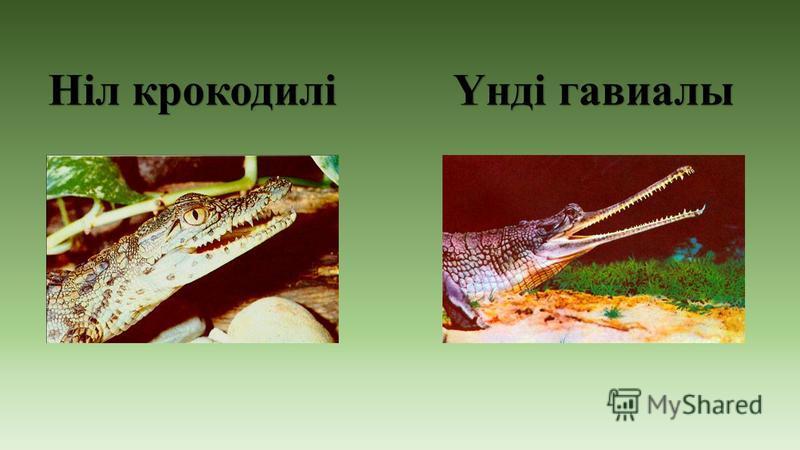 Ніл крокодилі Үнді гавиалы