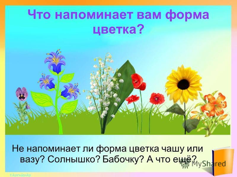 Что напоминает вам форма цветка? Не напоминает ли форма цветка чашу или вазу? Солнышко? Бабочку? А что ещё?