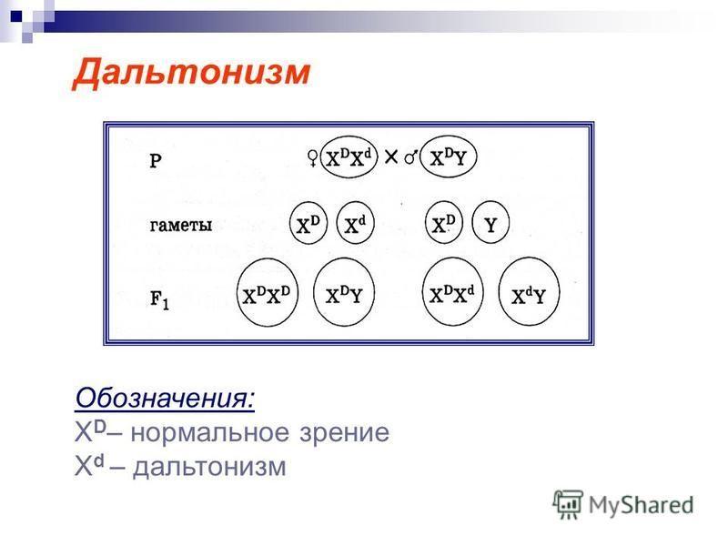 Дальтонизм Обозначения: Х D – нормальное зрение X d – дальтонизм