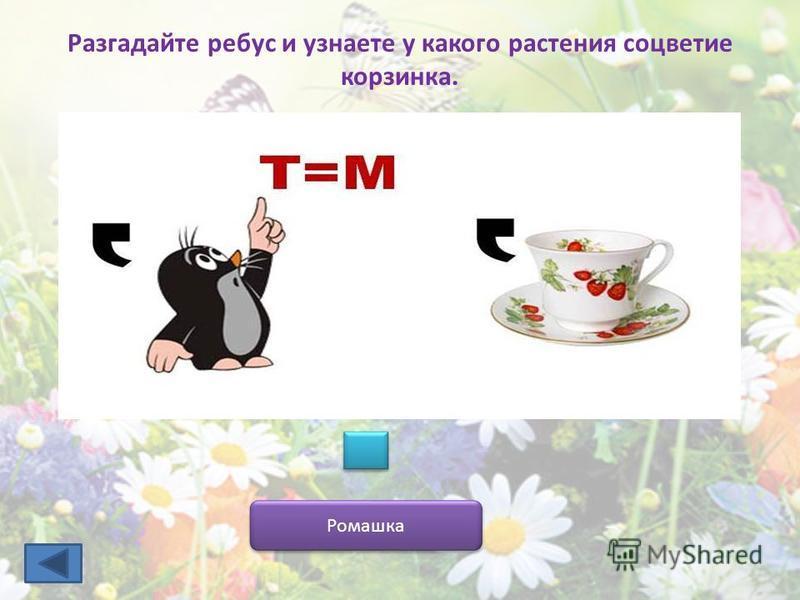 Разгадайте ребус и узнаете у какого растения соцветие корзинка. Ромашка