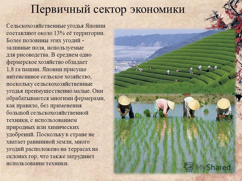 Первичный сектор экономики Сельскохозяйственные угодья Японии составляют около 13% её территории. Более половины этих угодий - заливные поля, используемые для рисоводства. В среднем одно фермерское хозяйство обладает 1,8 га пашни. Японии присуще инте