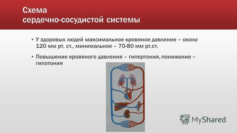 Схема сердечно-сосудистой системы У здоровых людей максимальное кровяное давление – около 120 мм рт. ст., минимальное – 70-80 мм рт.ст. Повышение кровяного давления – гипертония, понижение – гипотония
