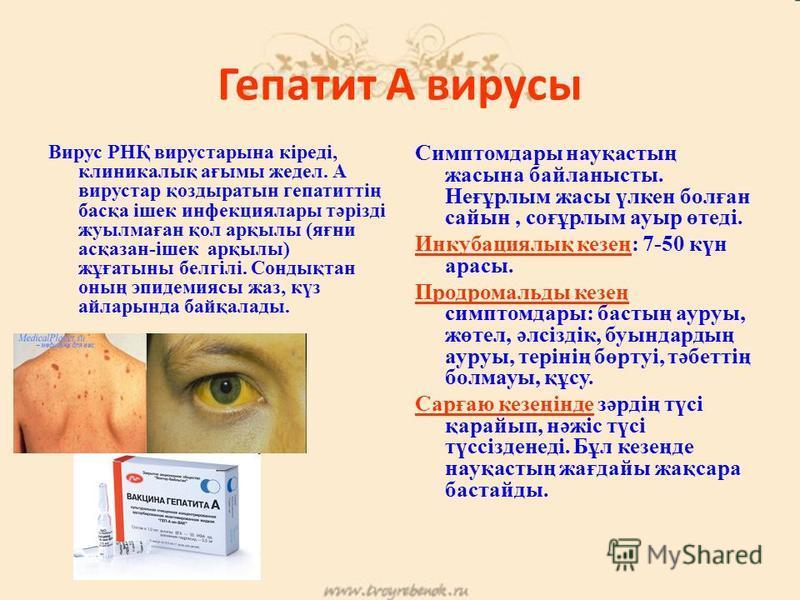 Гепатит А вирусы Гепатит А вирусы Вирус РНҚ вирустары на кіреді, клиникалық ағымы жедел. А вирустар қоздыратын гепатиттің басқа ішек инфекция лары тәрізді жуылмаған қол арқылы (яғни асқазан-ішек арқылы) жұғатыны белгілі. Сондықтан оның эпидемиясы джа