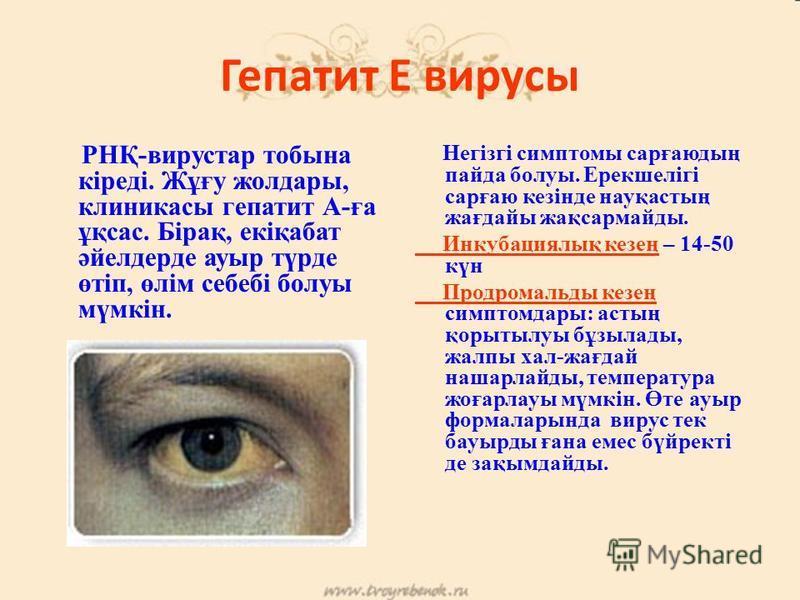 Гепатит Е вирусы Гепатит Е вирусы РНҚ-вирустар тобына кіреді. Жұғу желдары, клиникасы гепатит А-ға ұқсас. Бірақ, екіқабат әйелдерде ауры түрде өтіп, өлім себебі болуы мүмкін. Негізгі симптомы сарғаюдың пайда болуы. Ерекшелігі сарғаю кезінде науқастың