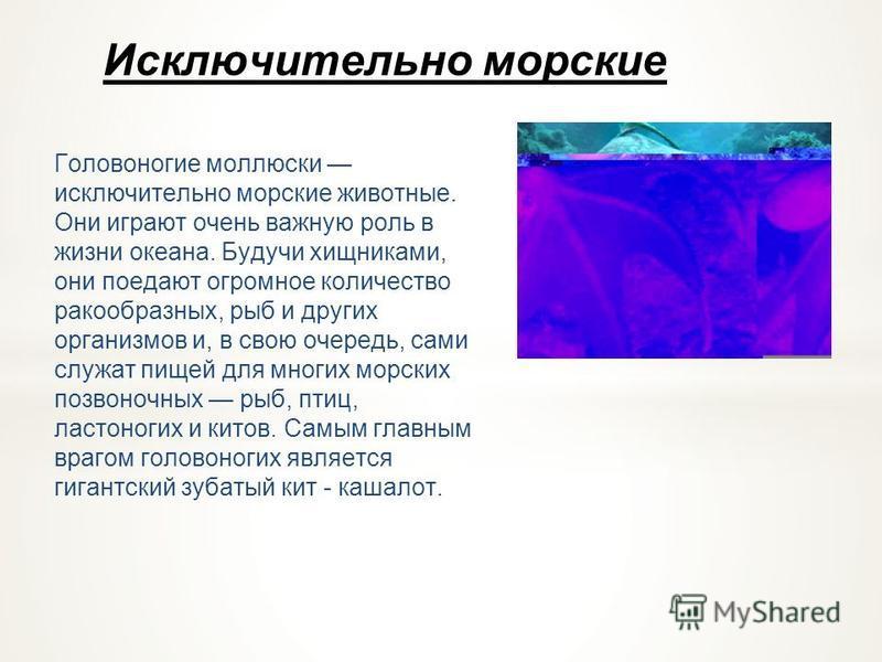 Движение головоногого моллюска У кальмаров, каракатиц, осьминогов мантийная полость функционирует как реактивный двигатель. Через мантийную щель вода набирается в мантийную полость, а затем при ее сокращении с силой выбрасывается через воронку, тело