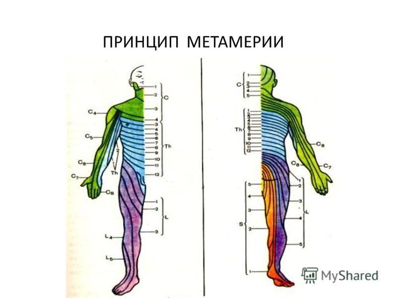 ПРИНЦИП МЕТАМЕРИИ