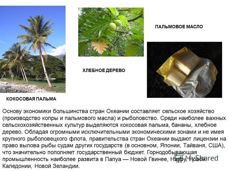 Основу экономики большинства стран Океании составляет сельское хозяйство (производство копры и пальмового масла) и рыболовство. Среди наиболее важных сельскохозяйственных культур выделяются кокосовая пальма, бананы, хлебное дерево. Обладая огромными