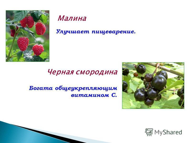 Малина Улучшает пищеварение. Черная смородина Богата общеукрепляющим витамином С.