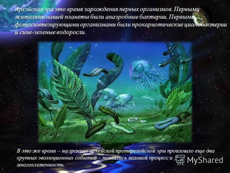 Архэйская эра это время зарождения первых организмов. Первыми жителями нашей планеты были анаэробные бактерии. Первыми фотосинтезирующими организмами были прокариотические цианобактерии и сине-зеленые водоросли. В это же время – на границе архейской