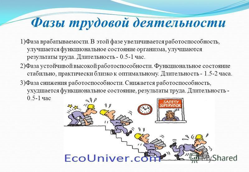 Фазы трудовой деятельности 1)Фаза врабатываемости. В этой фазе увеличивается работоспособность, улучшается функциональное состояние организма, улучшаются результаты труда. Длительность - 0.5-1 час. 2)Фаза устойчивой высокой работоспособности. Функцио
