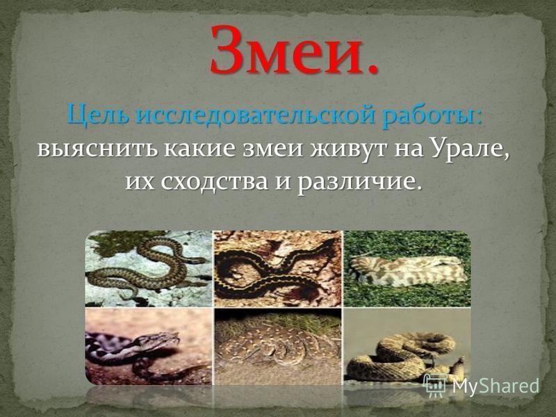 Змеи. Цель исследовательской работы: выяснить какие змеи живут на Урале, их сходства и различие.