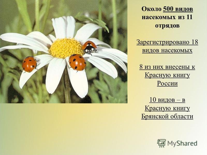 Около 500 видов насекомых из 11 отрядов Зарегистрировано 18 видов насекомых 8 из них внесены к Красную книгу России 10 видов – в Красную книгу Брянской области