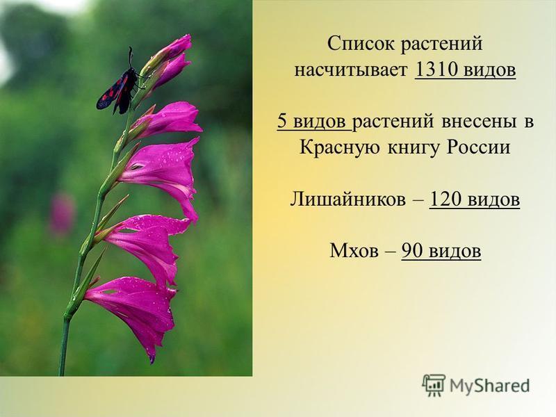 Список растений насчитывает 1310 видов 5 видов растений внесены в Красную книгу России Лишайников – 120 видов Мхов – 90 видов