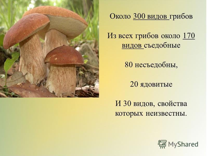 Около 300 видов грибов Из всех грибов около 170 видов съедобные 80 несъедобны, 20 ядовитые И 30 видов, свойства которых неизвестны.