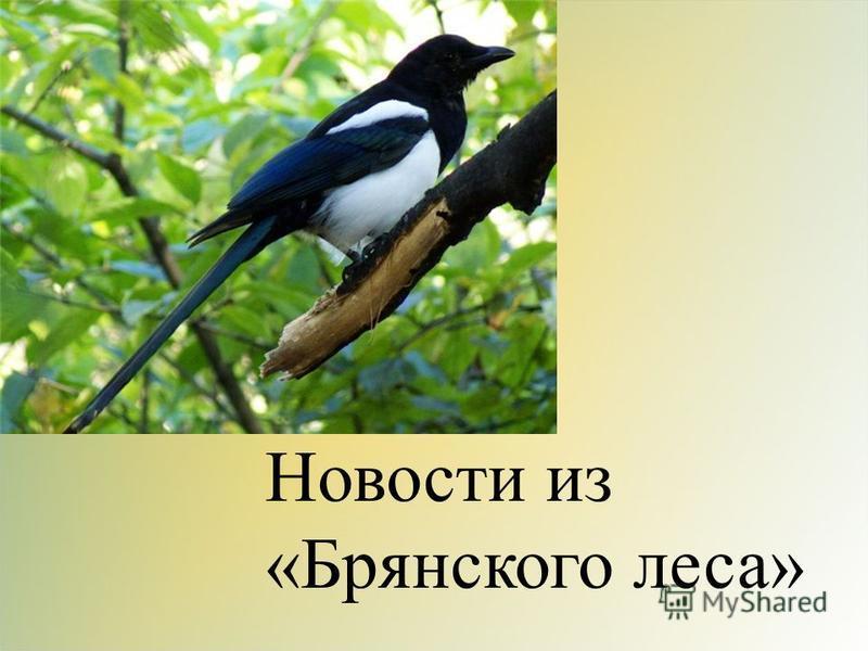 Новости из «Брянского леса»