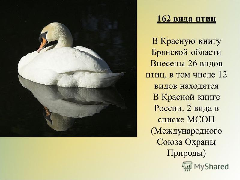 162 вида птиц В Красную книгу Брянской области Внесены 26 видов птиц, в том числе 12 видов находятся В Красной книге России. 2 вида в списке МСОП (Международного Союза Охраны Природы)