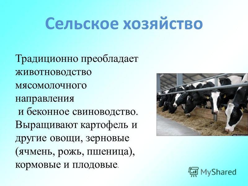 Сельское хозяйство Традиционно преобладает животноводство мясомолочного направления и беконное свиноводство. Выращивают картофель и другие овощи, зерновые (ячмень, рожь, пшеница), кормовые и плодовые.