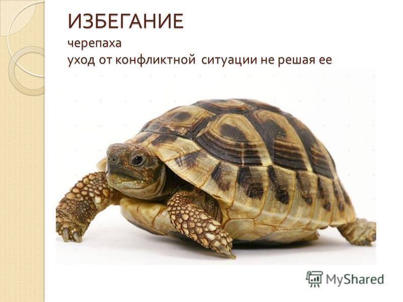 ИЗБЕГАНИЕ черепаха уход от конфликтной ситуации не решая ее