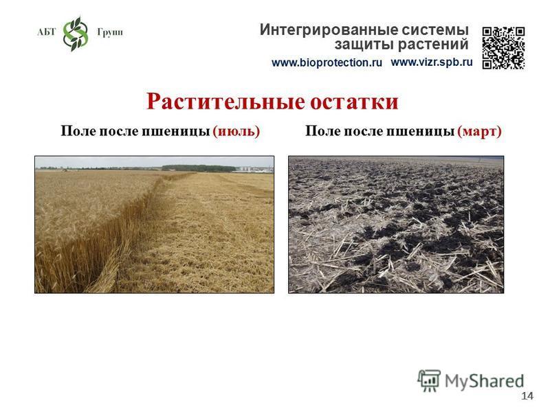 14 Растительные остатки Поле после пшеницы (июль)Поле после пшеницы (март) www.bioprotection.ru www.vizr.spb.ru Интегрированные системы защиты растений