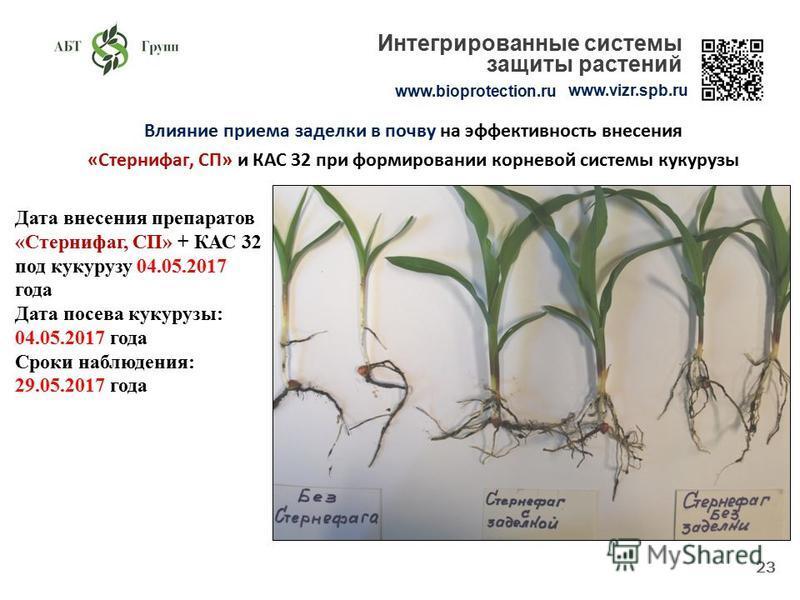 Влияние приема заделки в почву на эффективность внесения «Стернифаг, СП» и КАС 32 при формировании корневой системы кукурузы 23 www.bioprotection.ru www.vizr.spb.ru Интегрированные системы защиты растений Дата внесения препаратов «Стернифаг, СП» + КА