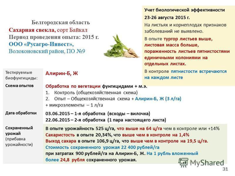 Учет биологической эффективности 23-26 августа 2015 г. На листьях и корнеплодах признаков заболеваний не выявлено. В опыте тургор листьев выше, листовая масса больше, пораженность листьев пятнистостями единичными колониями на отдельных листах. В конт