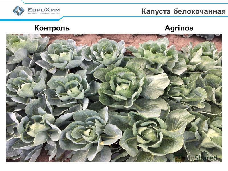 Контроль Agrinos Капуста белокочанная