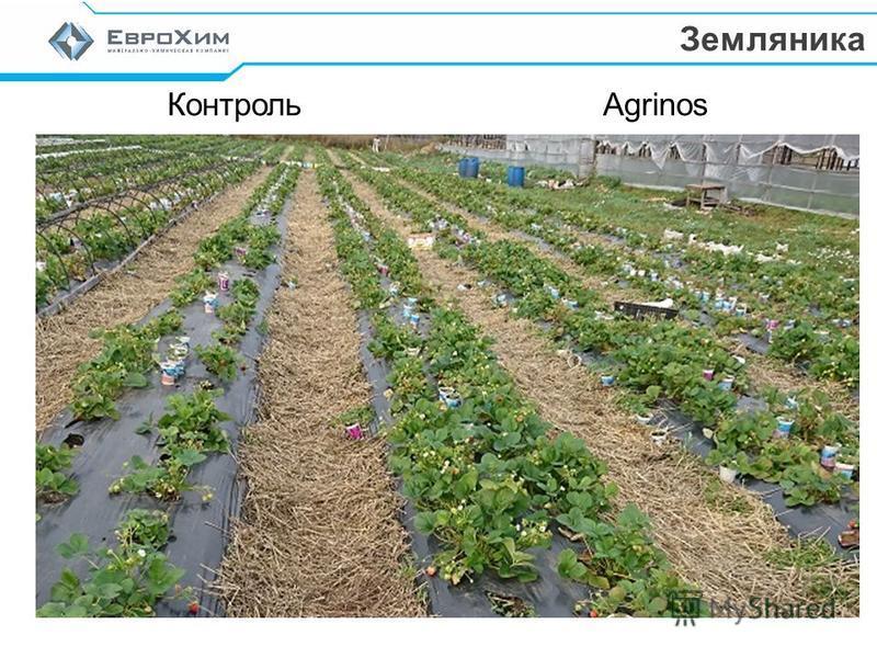 Контроль Agrinos Земляника